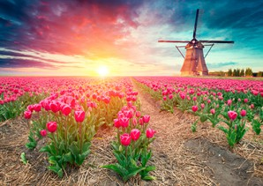 https://flights.travcoholidays.travel/Cairo Amsterdam flights With Travco Holidays